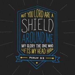 shield ps 3.3