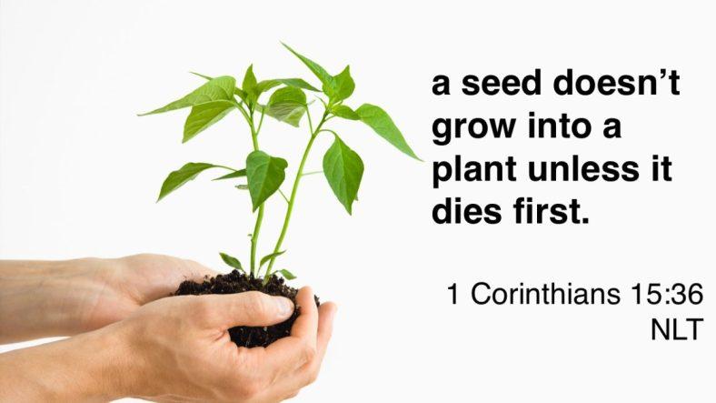 Seed-1240x698